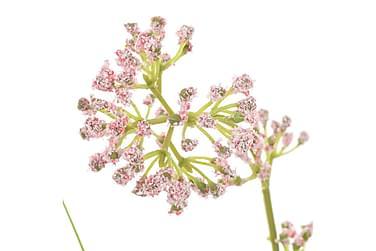 Kunstigt Græs Med Blomst 75 Cm