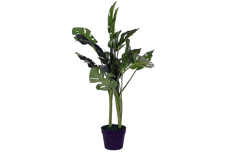 Monstera Plante I Krukke