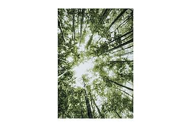 Indie Forrest 200x290