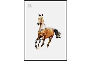 Horse Billede