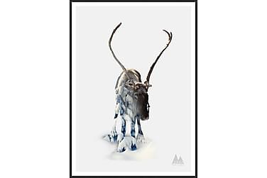 Reindeer Billede