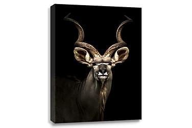 Antilope Digitalprintet Billede Canvas