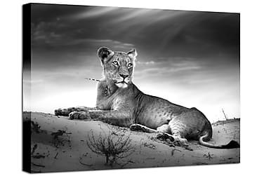 Billede Canvas Lioness