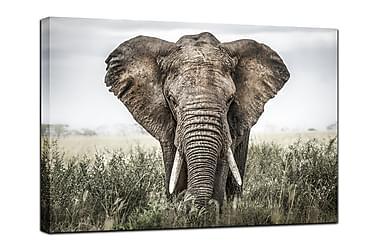 Billede i kanvas Elephant in grass