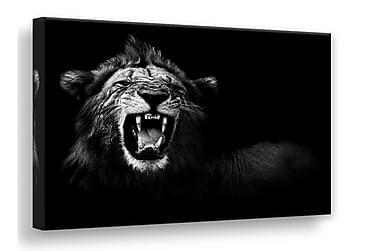 Billede Lærred Lion