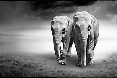 Canvas  Elephant