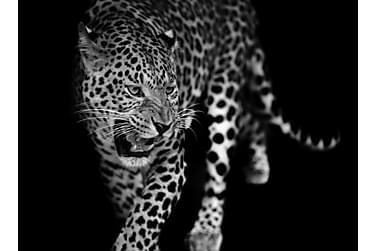 Canvas  Leopard