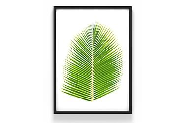 Plante Poster